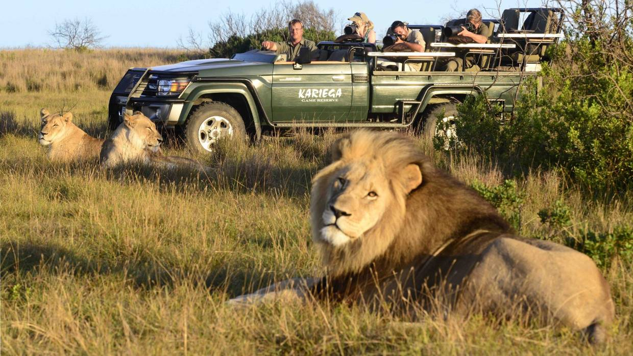 Game Viewing Safari