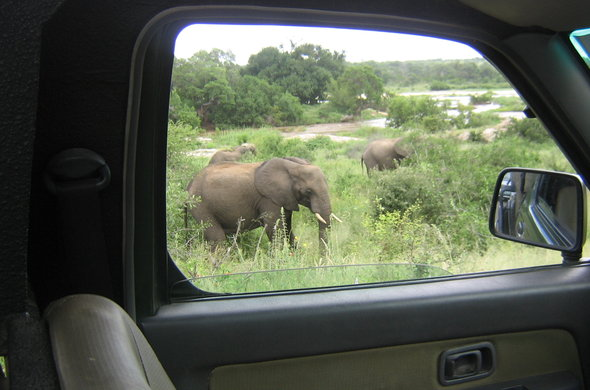 Self Drive Safari
