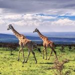 ngorongoro-wildlife