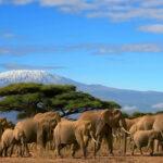 amboseli-wildlife